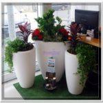 Plantas para empresas