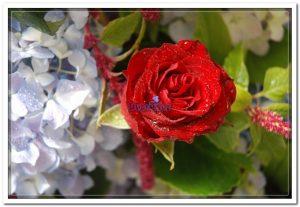 Arranjo de flores - doceflor