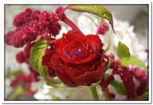 Doceflor florista Arranjo02