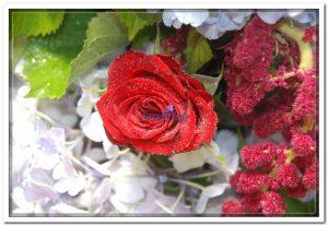 Doceflor florista Arranjo03
