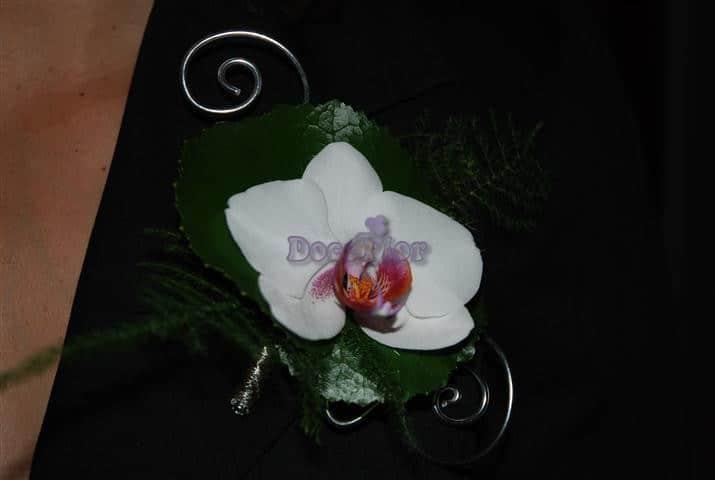 Corsage Orquidea Phalaenopsis com arame