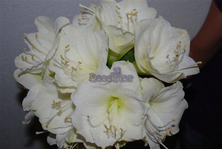 Ramo de Noiva Amaryllis Brancos