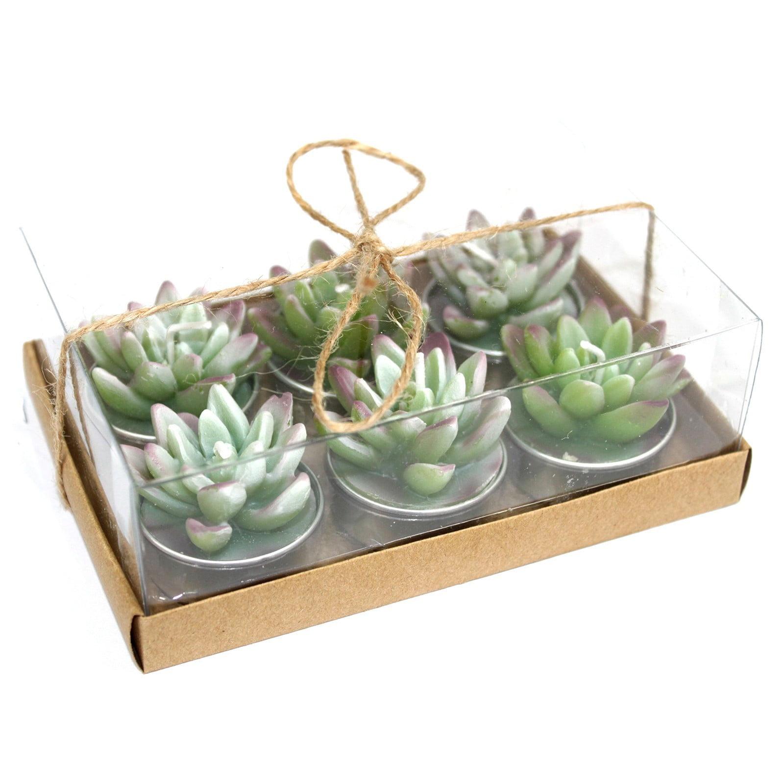 Conjunto de 6 velas – Cacto Agave (caixa de presente)